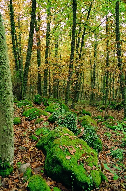 Bosque de Castaños en Promavera. Fotografía cedida por DIVA.