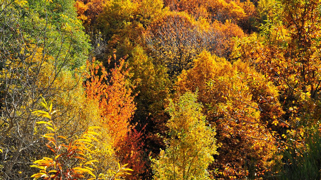 Bosque de Castaños en Otoño. Fotografía cedida por DIVA.