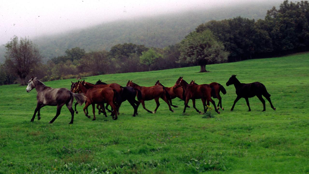 Caballos salvajes trotando por el prado. Fotografía cedida por DIVA.