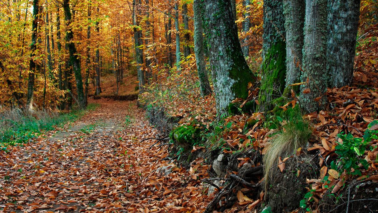 Camino cubierto por las hojas del otoño. Fotografía cedida por DIVA.