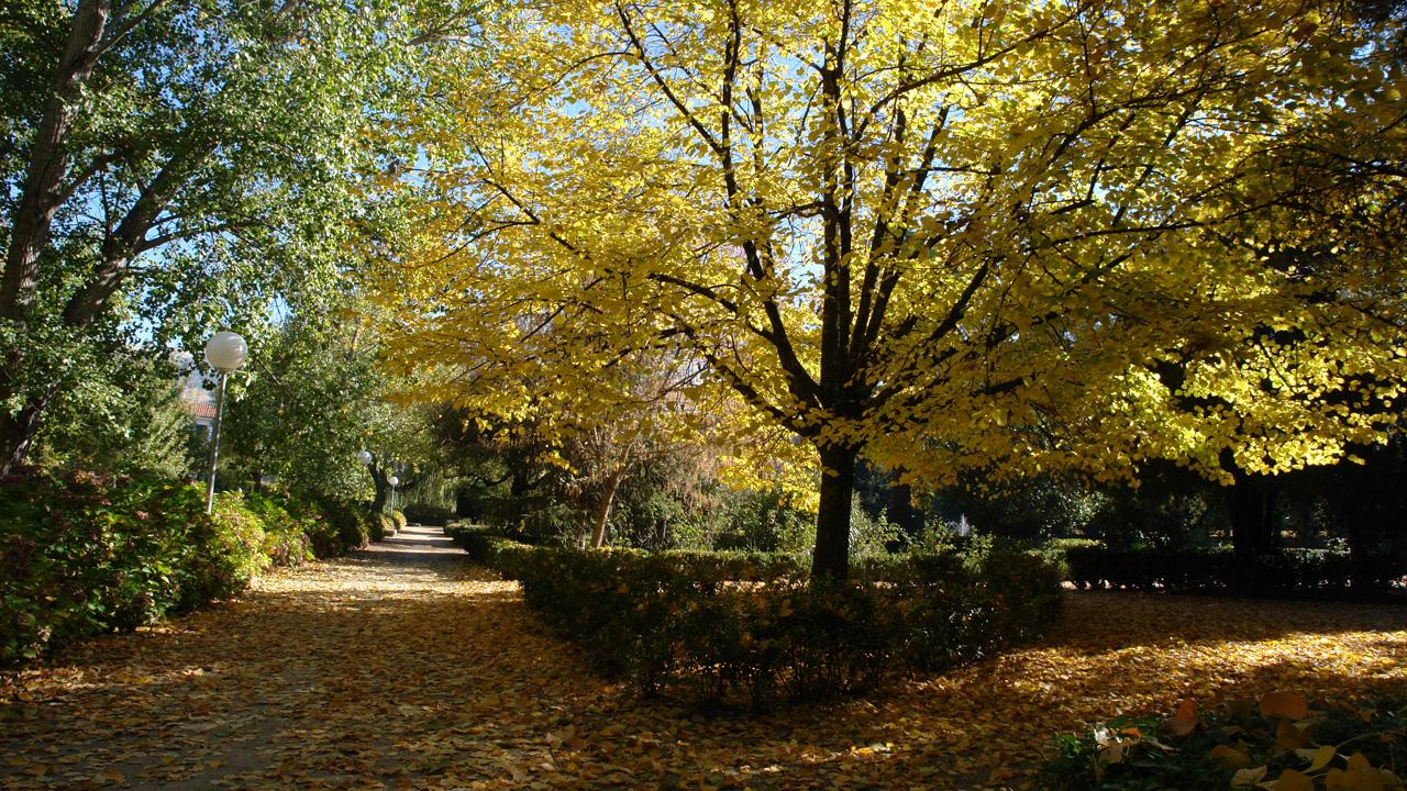 Parque Municipal. Fotografía cedida por DIVA.